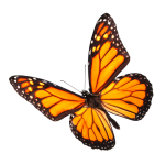 NL596_4PBuS2Ot_vlinder1[1]